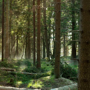 Espace Forêt